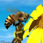 honeybee_photobucket_thumb