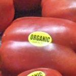 organic_pepper