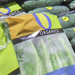 organic_celery